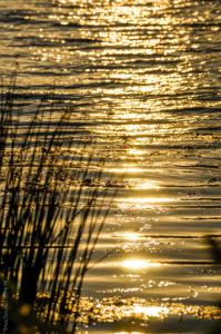 Morgensonne auf dem Neckar